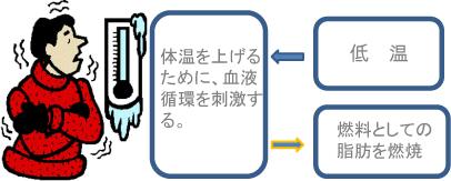 体温を上げるために、血液循環を刺激する